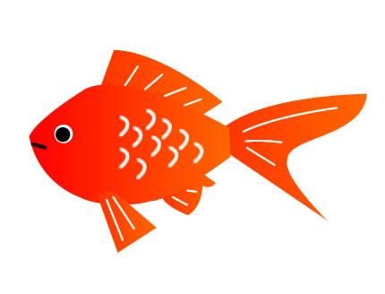 金魚の英語