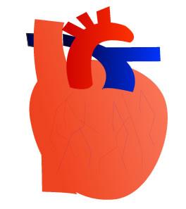 心臓の英語