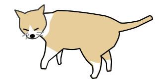 猫が歩いているの英語