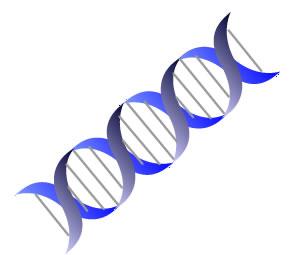 イラストで覚える英語・遺伝子